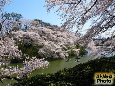 千鳥ヶ淵桜2012