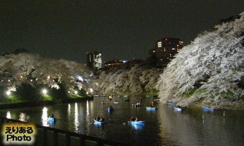 千鳥ヶ淵夜桜2013
